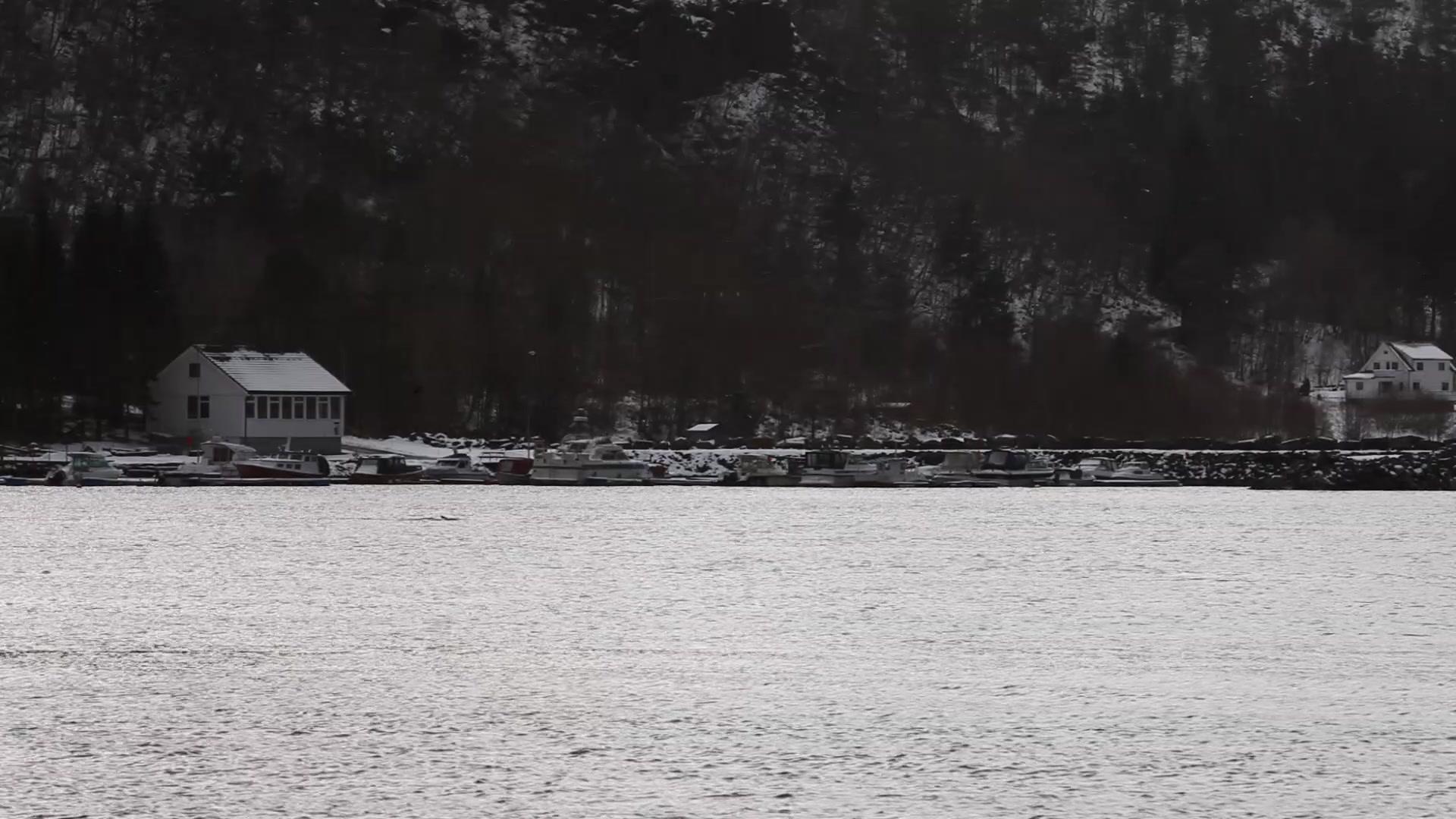 Grindkval i Tennfjord